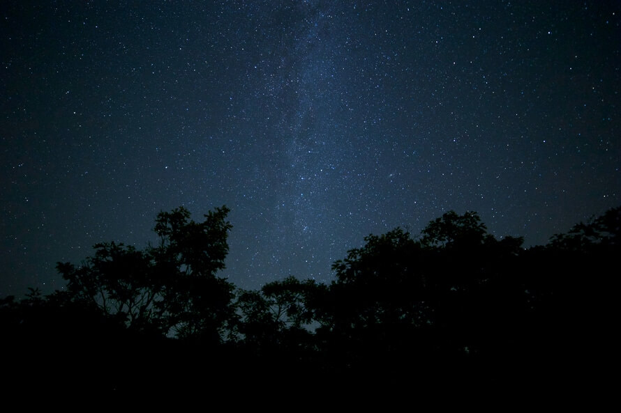 night-trees-milky-way-stars-large